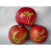 Pochoirs pour marquage de fruits