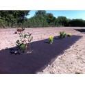 Feutre de paillage 100% biodégradable*