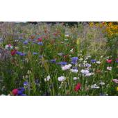 Jachère Fleurie Mélange Bio Diversité