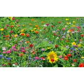 Mélanges Fleuries CELINE