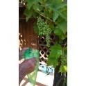 Lot de 10 protections grappe de raisin