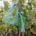 Lot de 10 protections-sachets grappe de raisin