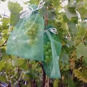 Lot de 10 protections-sachets grappe...