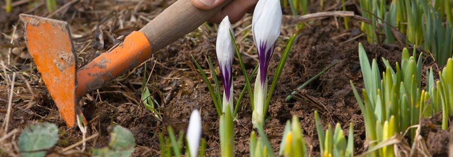 outils pour l'entretien et le déserbage en permaculture