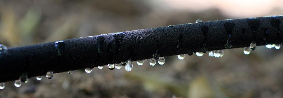 arrosage par tuyau suintant pour limiter la consommation en eau de manière responsable